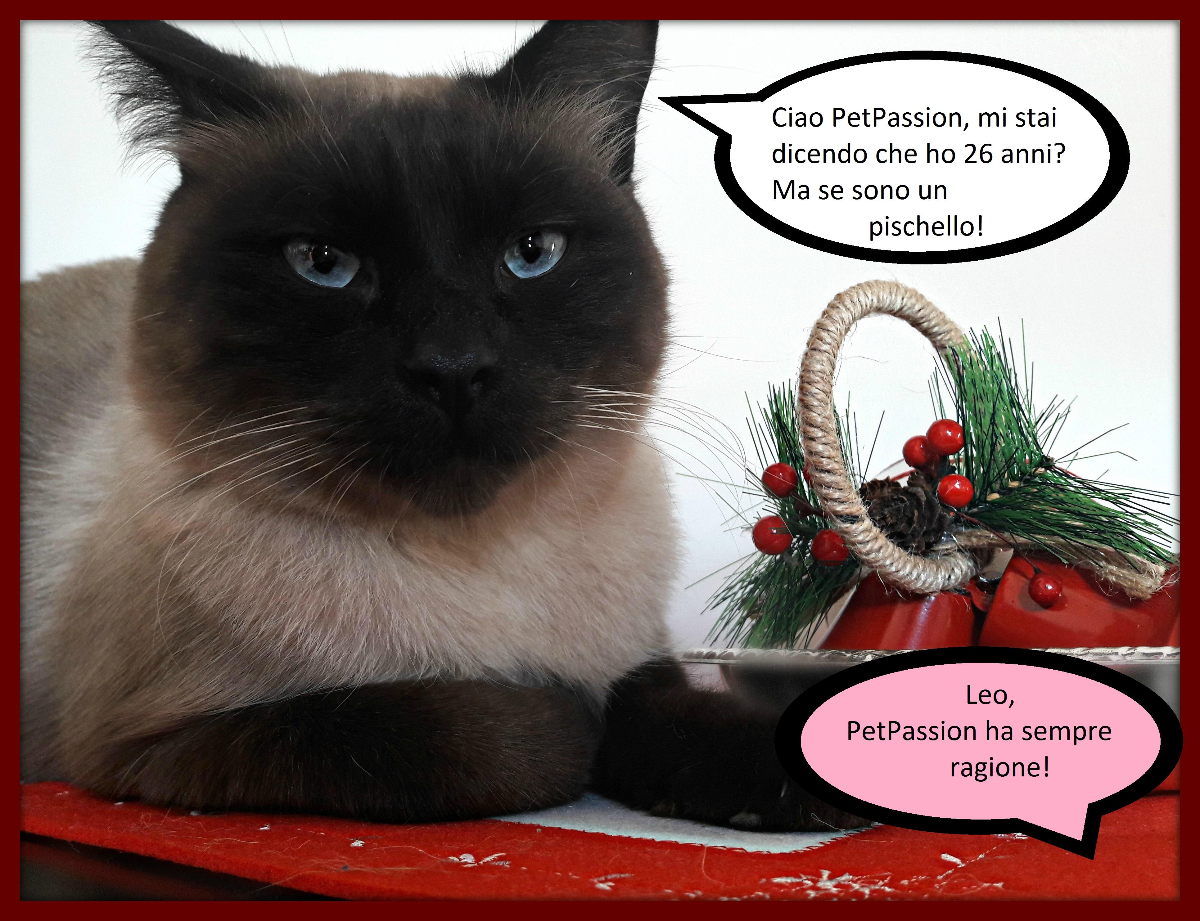 Calendario Eta Gatti.Avete Calcolato L Eta Anagrafica Del Vostro Gatto Leo Della