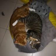 Rudy e Pascal