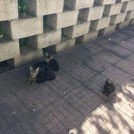 Vi presento Tigrotta e i suoi 3 cuccioli