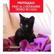 ATTENZIONE: pericolo gatti neri