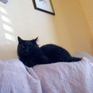 Giornata del Gatto Nero