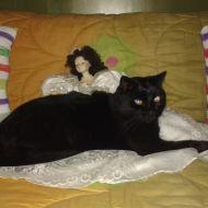 vi presento il mio bel gattone nero ;)