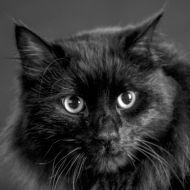 Omar il gatto che fa beneficenza per i meno fortunati!! Cerca Omar Gattonero anche su Facebook