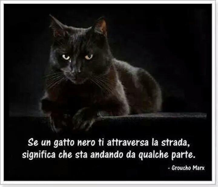 Gruppo Adorabili Gatti Neri Petpassion