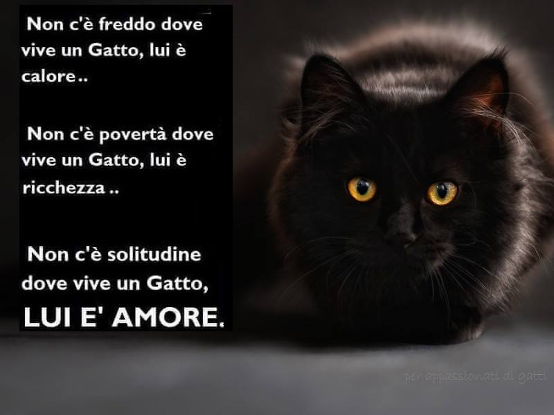 https://dt-petpassion.s3.amazonaws.com/s/group/0/344/photo/137467/full/344_137467_amore.jpg