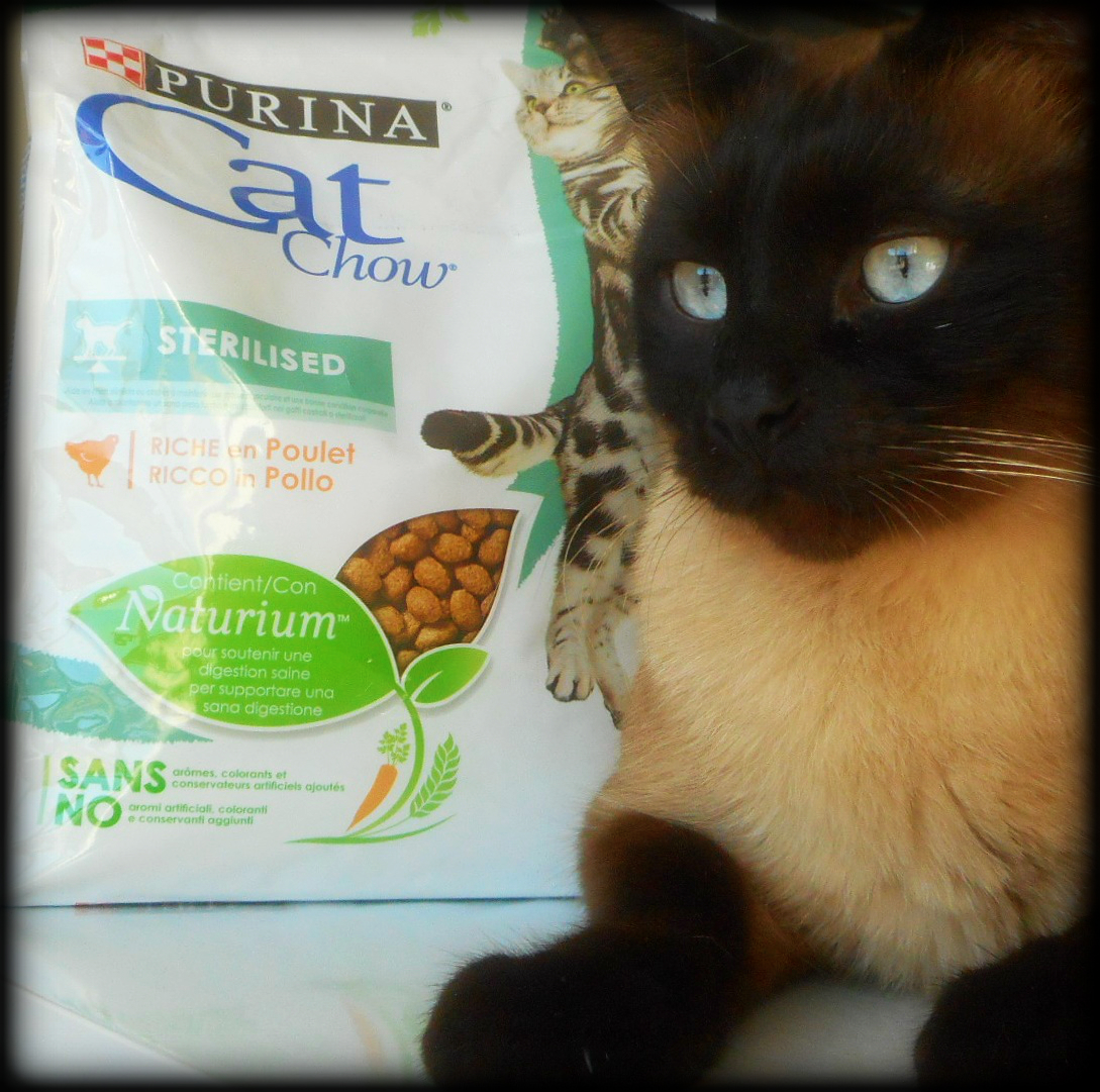 Buona Serata Nella Galleria Del Gruppo Purina Cat Chow Per