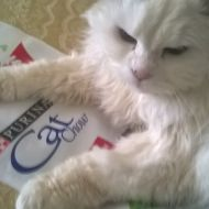 Purina® Cat Chow® e fiocco