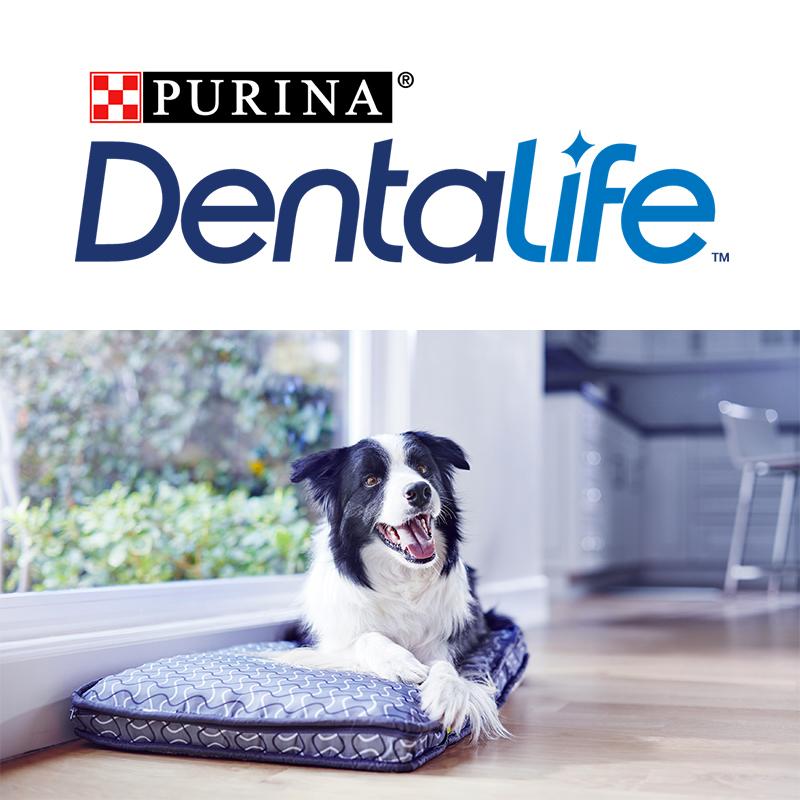 PURINA DENTALIFE™, il nuovo snack per l'igiene orale del tuo cane.
