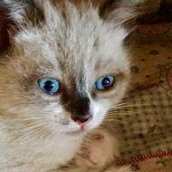 Gli occhi dei gatti sono indimenticabili