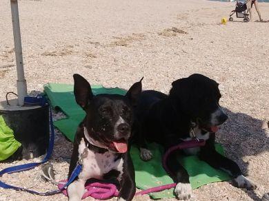 vogliamo spiagge libere per i cani