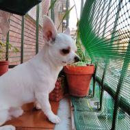 Ciao! Io sono Rudy e mi piace stare sul balcone e guardare  chi passa in strada e abbaio ai cagnoni!