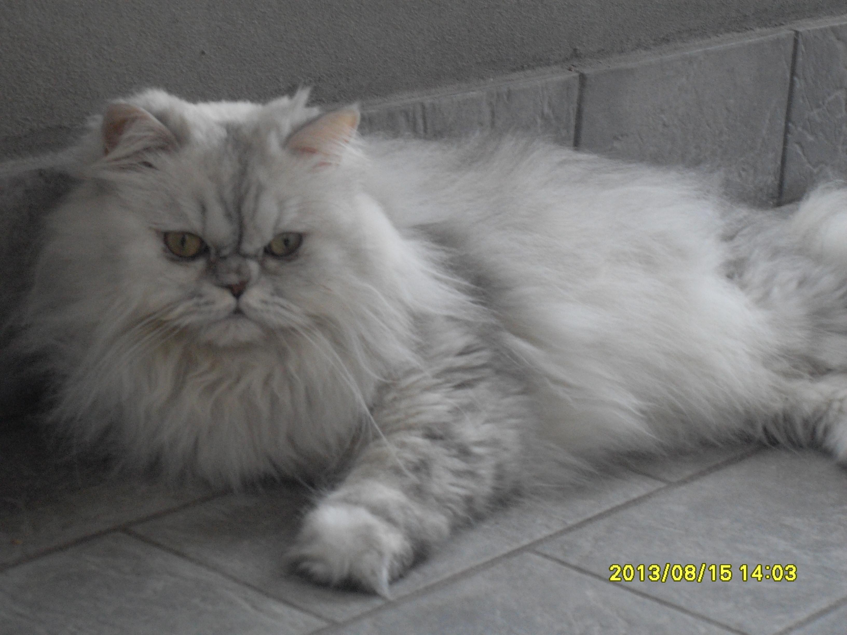 Daisy Nella Galleria Del Gruppo Per Tutti Gli Amanti Dei Gatti