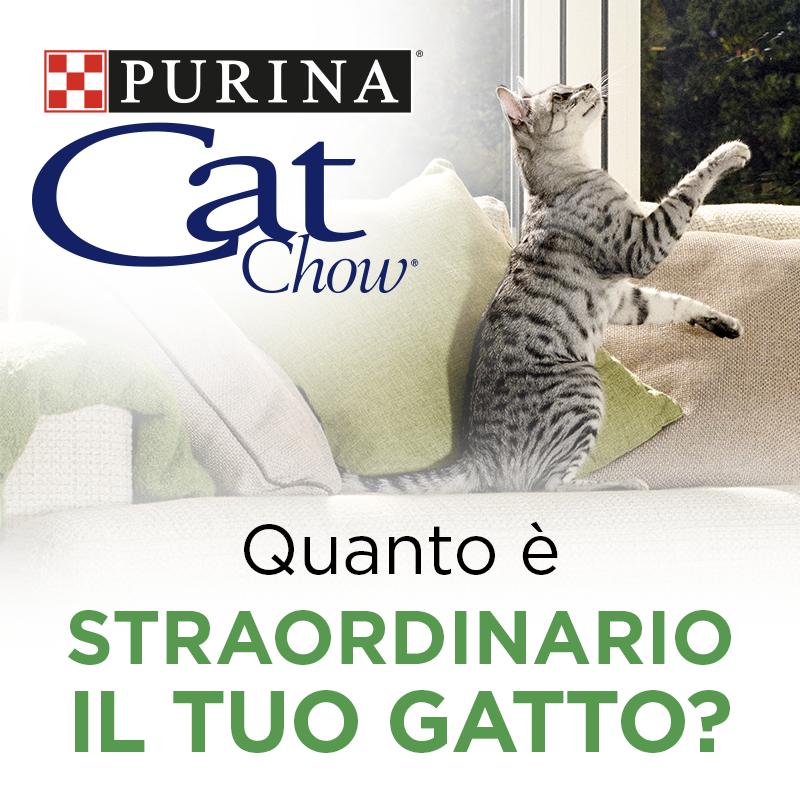 Quanto è straordinario il tuo gatto?