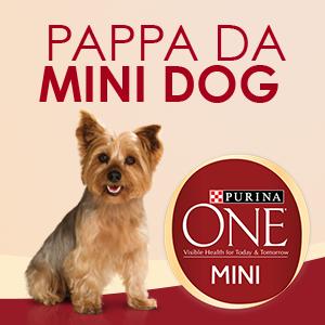 Pappa da Mini Dog