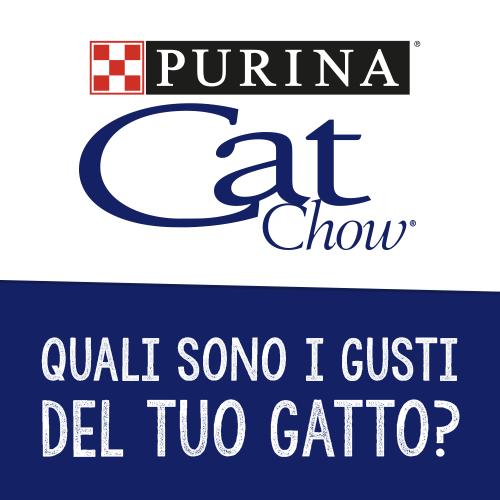 Quali sono i gusti del tuo gatto?