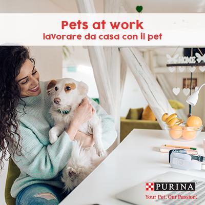 Pets at work: lavorare da casa con il pet