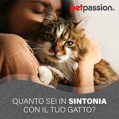 Quanta affinità hai con il tuo gatto?