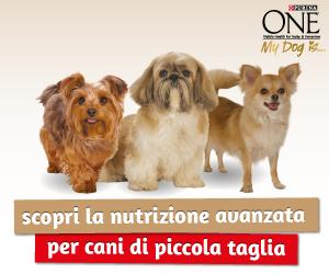 Scopri la nutrizione avanzata per il tuo cane di piccola taglia!