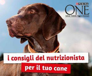 Scopri i consigli per la corretta alimentazione del tuo cane!