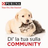 Di' la tua sulla community!