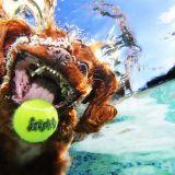 Cani in acqua: le foto