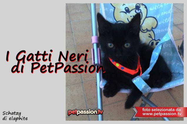 I Gatti Neri di PetPassion