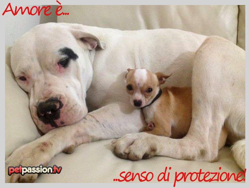 Conosciuto Album Cartoline di San Valentino: amore e animali domestici  KN05