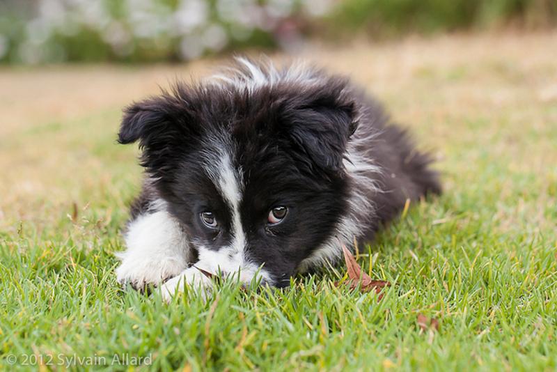 Risultati immagini per cani bianco e nero