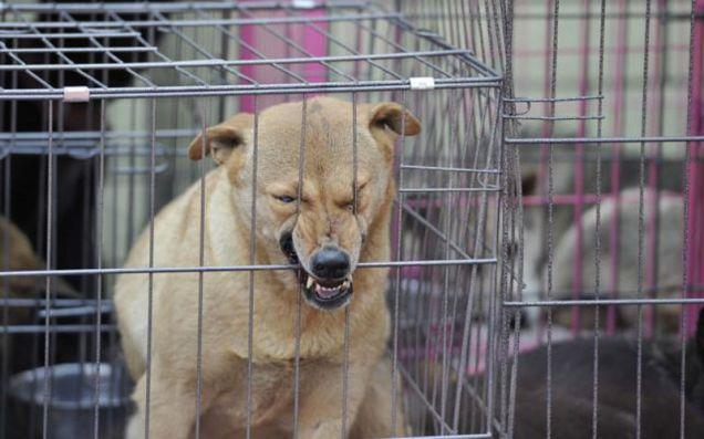 Cina: salvati 900 cani destinati ai ristoranti