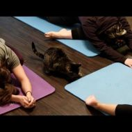 Cat Yoga - Yes, you can [video divertenti animali]