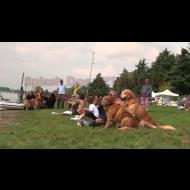 Splash Dog: gara di tuffi per cani!