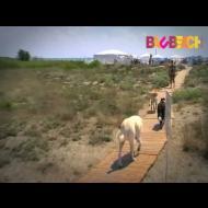 Bau Beach, la spiaggia per cani di Maccarese