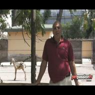 Il cucciolo di zebra del Bioparco!