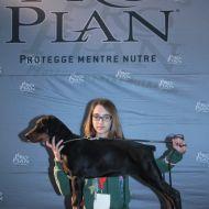 Cucciolo di Dobermann nero focato