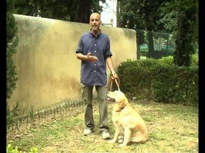Come comportarsi con un cane guida