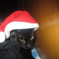 Mephisto Natale
