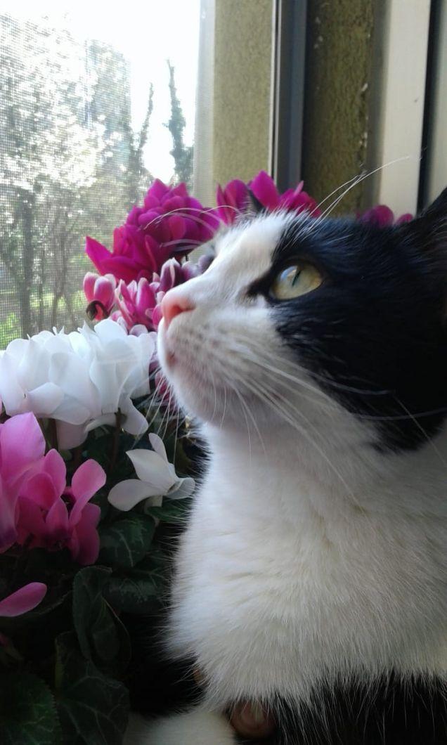 è arrivata la primavera!!!