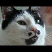 Sissolina-miao