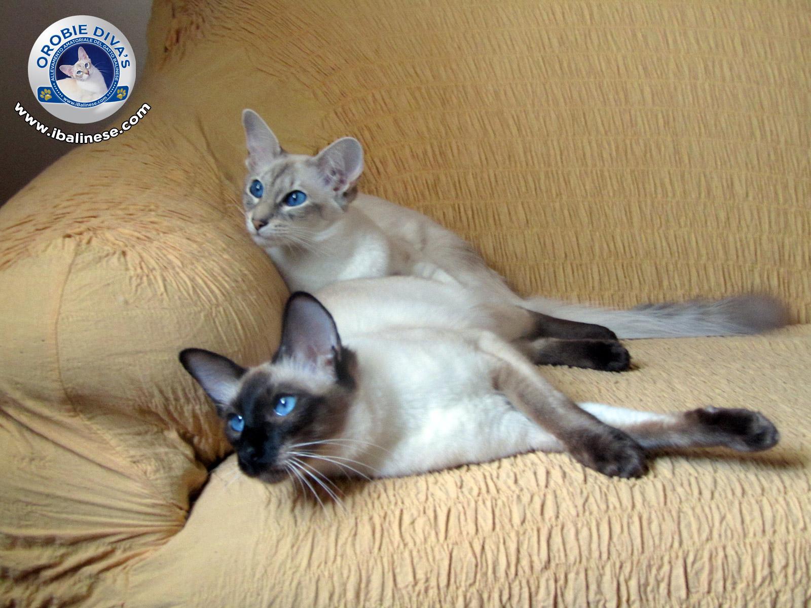 Relax sul divano...  Petpassion