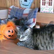 Licetto e Halloween