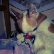 Knut : il pupazzino è mioooooo!!!!