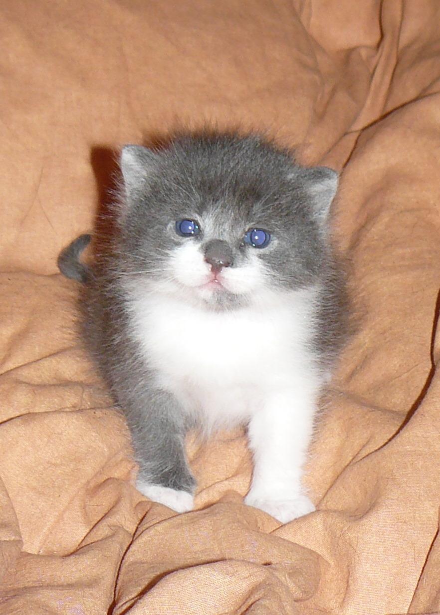 Non Sono Un Gattino Obeso Petpassion