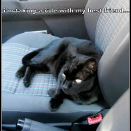 giro in macchina con umana!!!