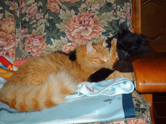 yuki e tigre dormono abbracciati  Vinci 40 stampe gratis ...