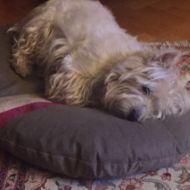 il cane piu stanco al mondo
