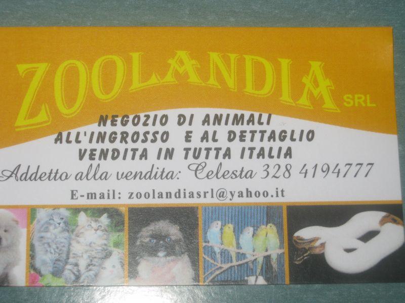 zoolandiasrl