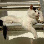 Felino su scalino