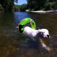 Athos adora nuotare!