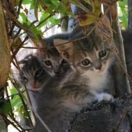 Tre gattini dolci e curiosi