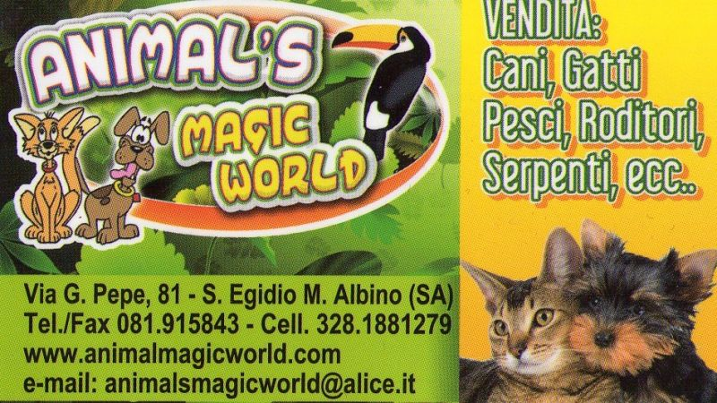animalmagicworld